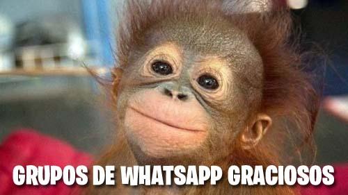 Grupos de Whatsapp graciosos